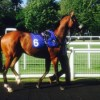 Hoy Hoy and Bleu Astral Back On Track